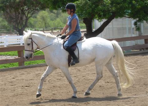 pennswoods puppies pennswoods horses for sale seterms
