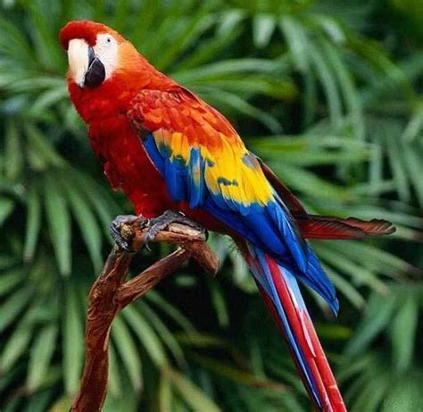 cats parrots and butterflies images scarlet macaw wallpaper and background photos 22801834