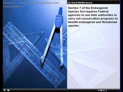 endangered species act section 9 the endangered species act of 1973 section 7 youtube