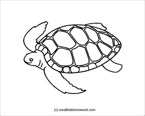 Turtle Outline by 15 Best Images About Outline Pictures On