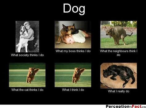what do dogs think 20 best images about perception vs fact on facts c counselor and a smile