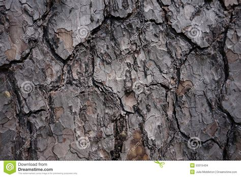 brown tree pattern brown grey tree bark pattern stock photo image 53315434