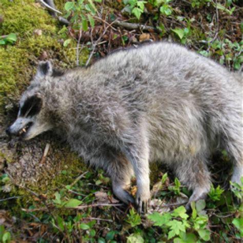 boca raton fl dead animal removal services animal