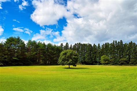 Alone Tree Landscape Stock By Artistengg On Deviantart