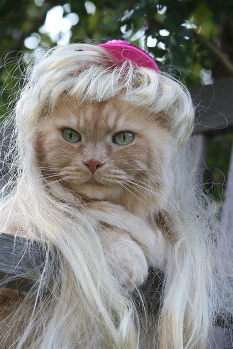 cat wig cats in wigs maret 2014 lowongan kerja 2014