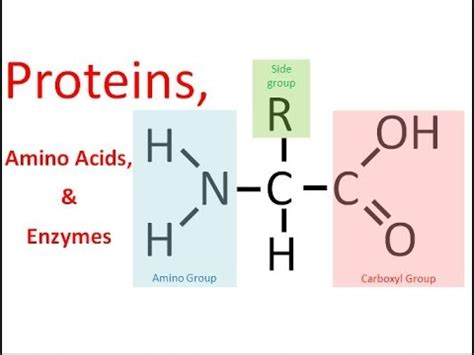 protein enzymes proteins enzymes regular biology updated