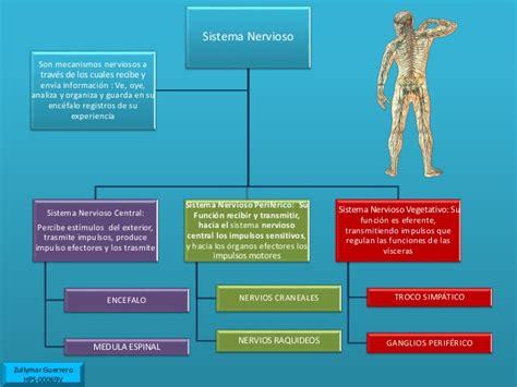 mapa conceptual del sistema nervioso trigun the complete anime series dual audio 540p