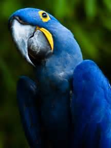 file hyacinth macaw jpg