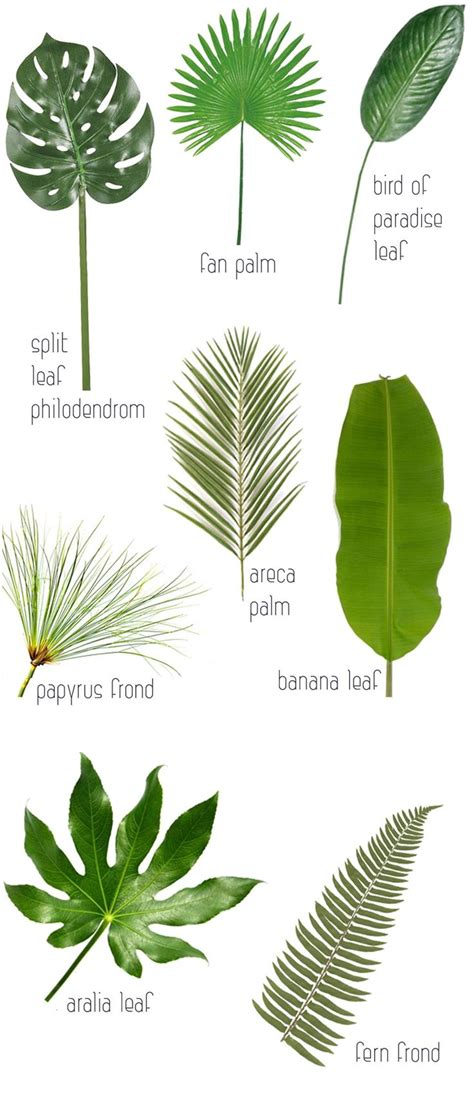 printable tropical leaves 25 best ideas about tropical leaves on pinterest