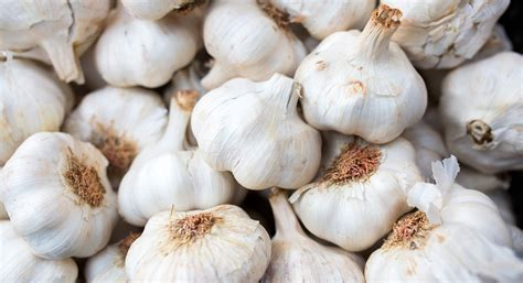 ate garlic is garlic for you thrive market
