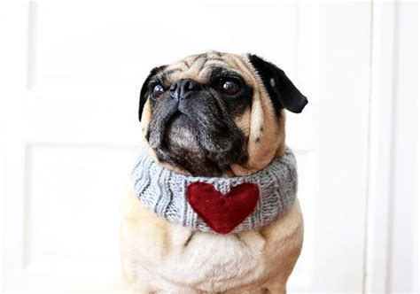pug rescue massachusetts featured shop all you need is pug etsy journal