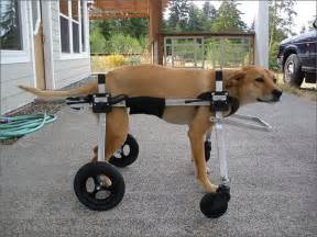 wheel chairs for dogs 25 best ideas about wheelchair on