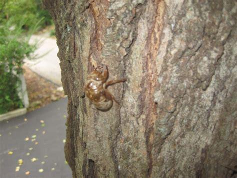 The Cicadas call of the cicadas seeds of design