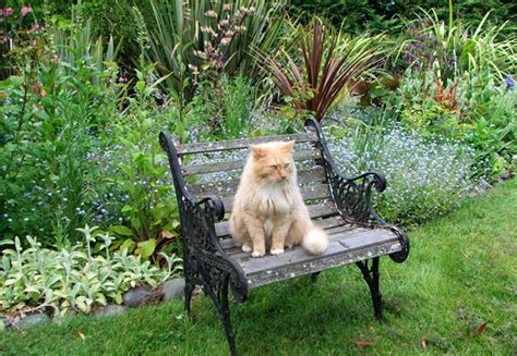 Cat Garden by 24 Cat Garden Statues For A Purrific Garden And Lawn This
