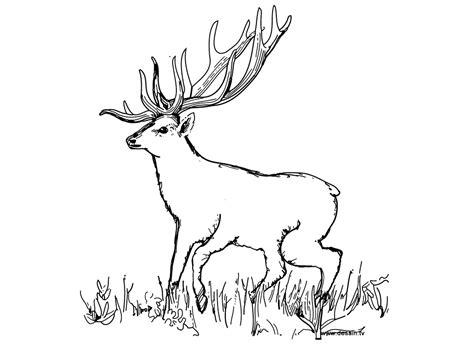 coloriage imprimer  cerf avec  coloriage  imprimer