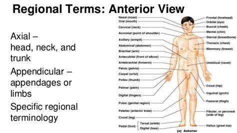 section definition anatomy anatomy body planes images