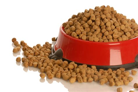 best puppy kibble what are the best foods for breeds breed food