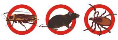 entreprise desinfection punaises lit 4351 soci 233 t 233 deratisation rats cafards punaises de lit