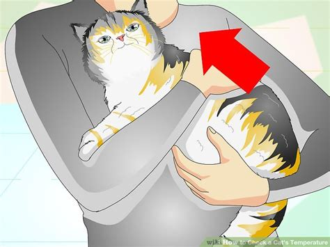 how to check a s temperature how to check a cat s temperature with pictures