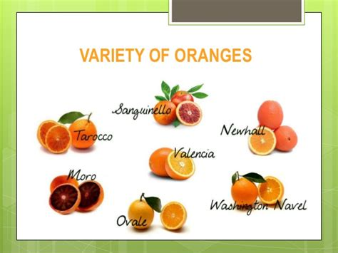 types of orange color citrus fruit variety