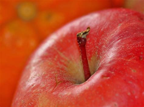 fruit vitamins free photo apple fruit fruits vitamins free image on