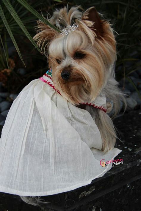 yorkie dressed up 1000 images about dressed up yorkie on yorkie dresses and yorkies