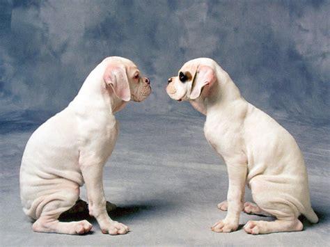 imagenes fondo de pantalla animales fondos de pantalla para perros foto fondos de pantalla