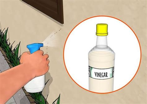 home remedies for ants removal