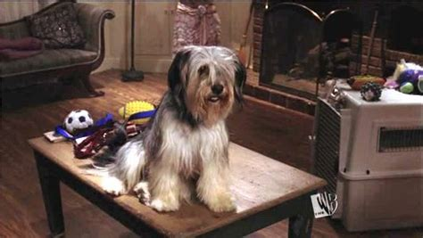 paul anka puppy favorite real not animated from a television show poll results television