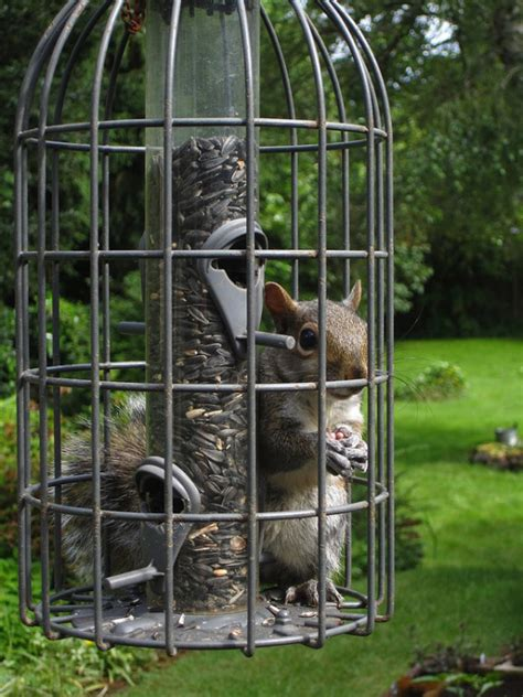 feeding songbirds without spoiling the squirrels d oh i y