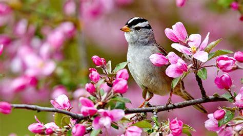 wallpaper flower and birds spring birds and flowers wallpaper on markinternational info