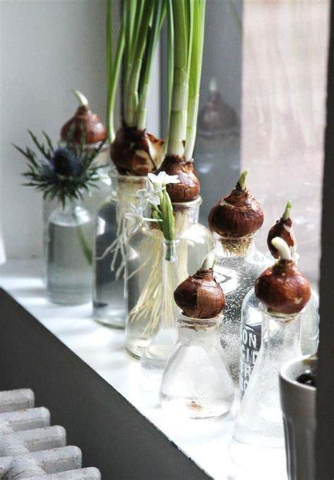 Indoor Water Garden by 15 Diy Indoor Water Garden Tips Decorazilla Design