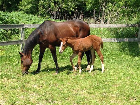 imagenes animales dela granja foto gratis caballo potro animales granja imagen