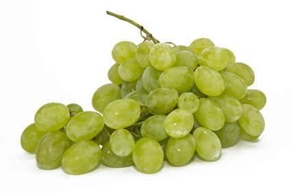 piantare uva da tavola piante uva vite