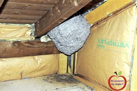 nid de frelons sous les tuiles lutte contre les gu 234 pes et frelons ma du verger