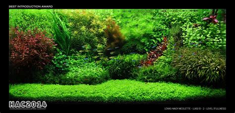 Aquascape Forum by Hac 2014 Hungarian Aquascaping Contest Result Uk