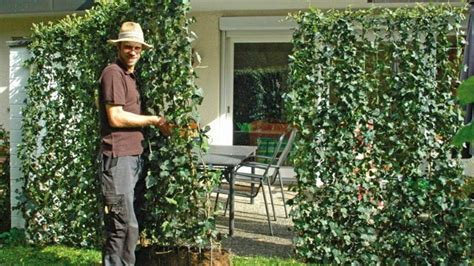 Pflegeleichte Sträucher Für Garten by Pflegeleichte Hecke Garten Speyeder Net Verschiedene