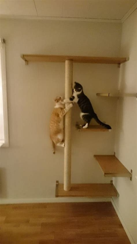 best 25 cat shelves ideas on diy cat shelves