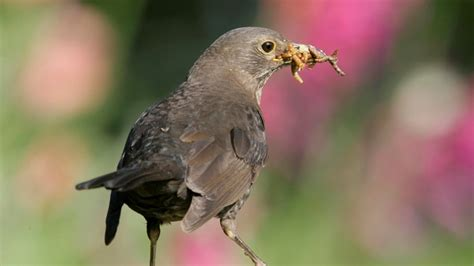 the rspb more about birds what do birds eat in the wild