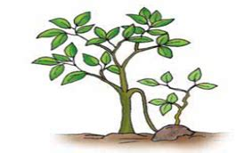 perkembangbiakan vegetatif buatan asa generasiku