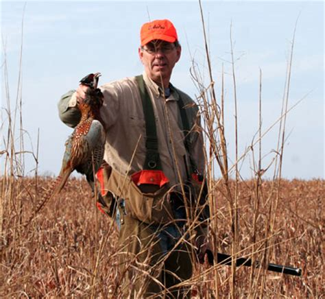 how to a to bird hunt pheasant bird www pixshark images galleries with a bite