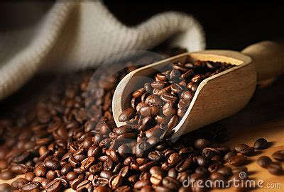 coffee bean royalty  stock image image