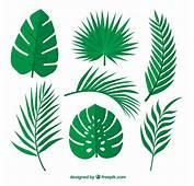 Set De Hojas Verdes Palmeras  Descargar Vectores Gratis