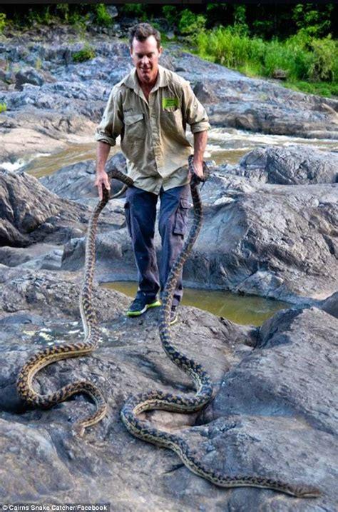 snakes  gold coast homes  cyclone
