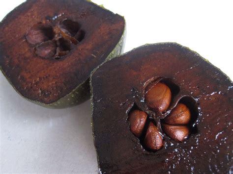 imagenes zapote negro zapote negro www imgkid com the image kid has it