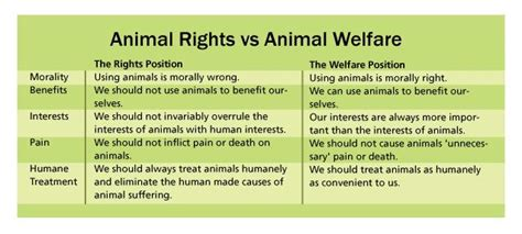 8 Ways To Support Animal Welfare by Animal Rights Vs Animal Welfare Text Images