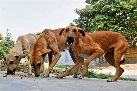 can you use human shoo on dogs disgusting kerala protesters kill stray dogs parade them on poles in itimes