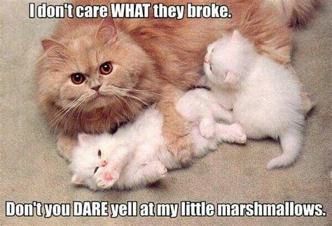 Cat Mom Meme - pin by hannah smithson on too cute pinterest