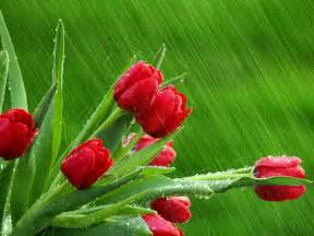 april showers flowers and plants wallpaper