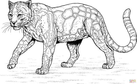 leopard coloring pages pdf walking clouded leopard coloring page free printable